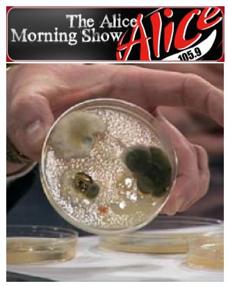 Growing bacteria experiment helps bj and howie from alice 105 9 search