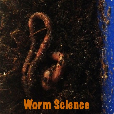 Worm Science with the Worm Vue Wonder. Get Up Close & Personal with Worms | Steve Spangler Science