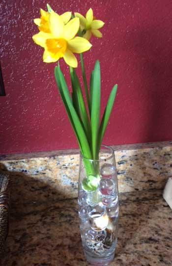 Teacher Appreciation - Flowers in Jelly Marbles