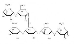 Simple starch molecule