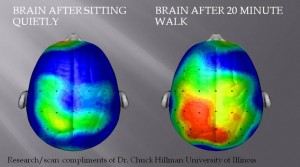 This is your brain, before and after a brisk walk!