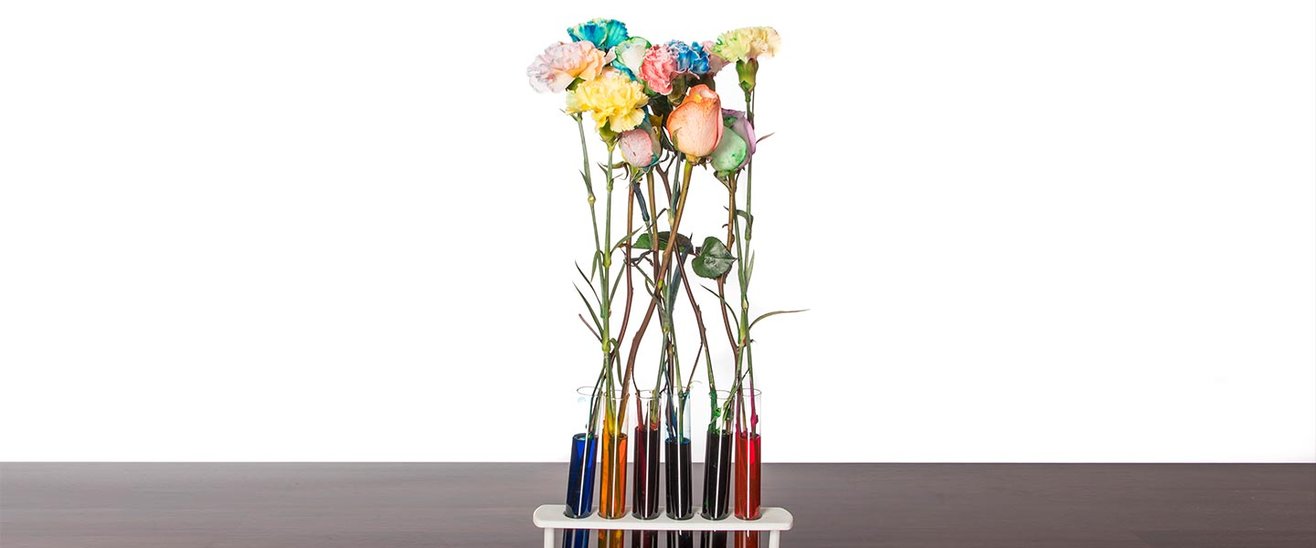 Color Changing Carnations - Test Tube Rack