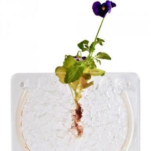 water-jelly-crystal-flower.jpg